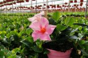 planta-ornamental-y-flor-cortada-174x116.jpg