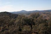 campo-licitacion-forestal-174x116.jpg