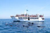 cetaceos-barco-174x116.jpeg