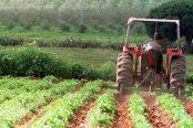 finca-agricultura-ecologica-koq-620x349@abc-174x116.jpg