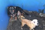 perros-abandonados-174x116.png